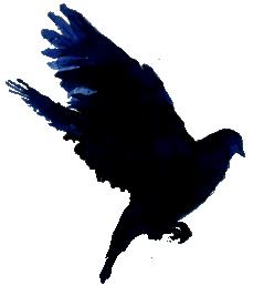 BirdFont v1.7 Full indir - Font Yönetim Programı