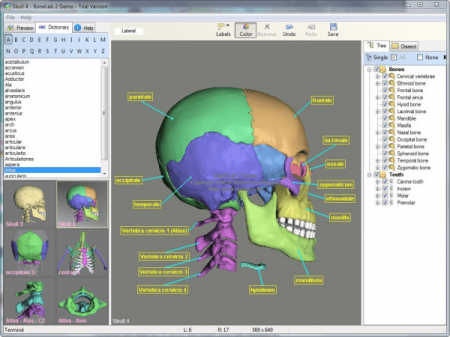 BoneLab 3D v2.3.36