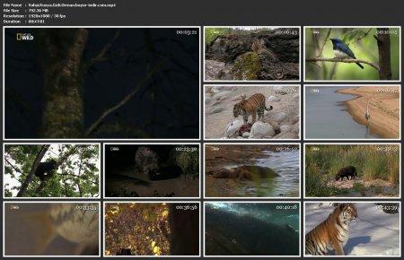 Vahşi Rusya: Gizli Orman Türkçe Belgesel