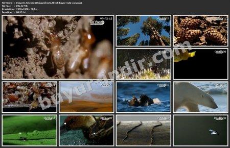 Doğa ve Teknoloji: Doğayı Örnek Almak