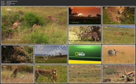 Çita: Ölümcül İçgüdü